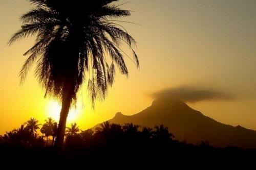 palma con lo sfondo tramonto
